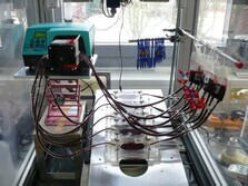 In-vitro blood experiment in flow chambers